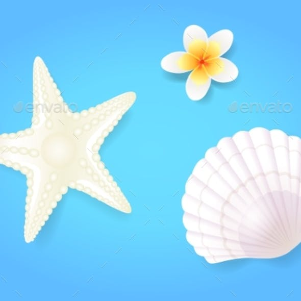 Snow-White Shellfish and Starfish with Pale Exotic