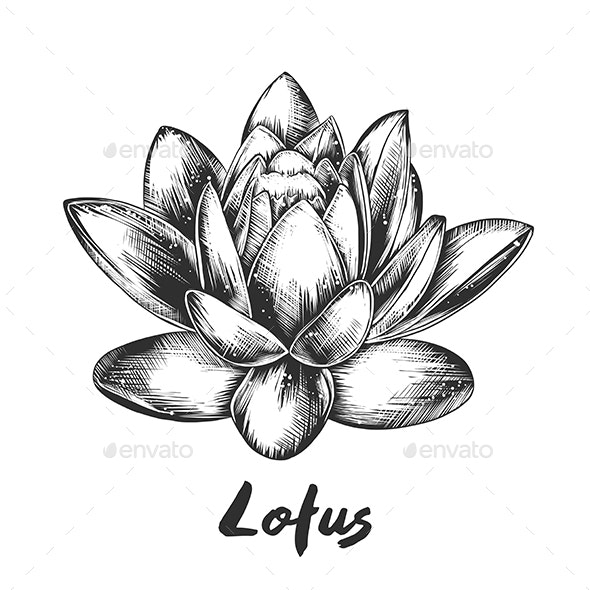 Hand Drawn Sketch of Lotus - Flowers & Plants Nature