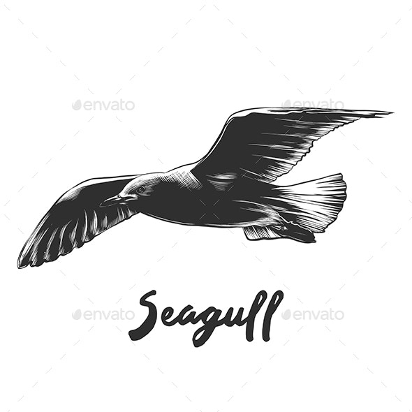 Seagull in Monochrome Isolated - Animals Characters