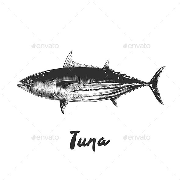 Tuna Fish in Monochrome Isolated - Animals Characters