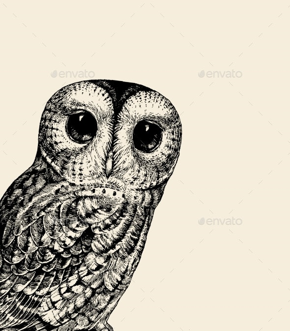 Owl Illustration - Animals Characters