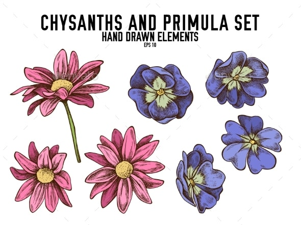 Vector Collection of Hand Drawn Colored Chrysanthemum - Flowers & Plants Nature
