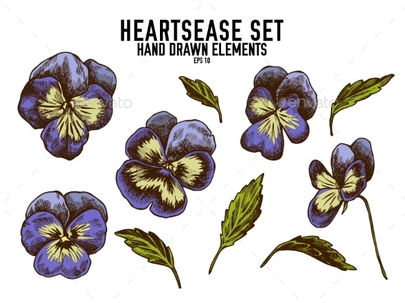Vector Collection of Hand Drawn Colored Heartsease - Flowers & Plants Nature