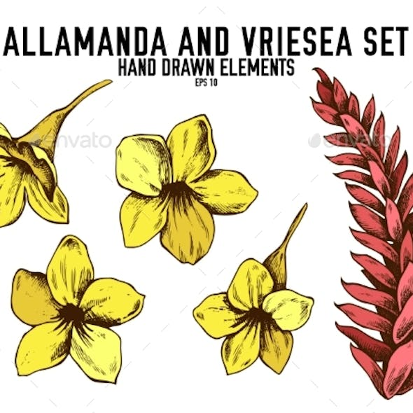 Vector Collection of Allamanda and Vriesea