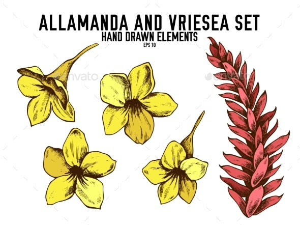Vector Collection of Allamanda and Vriesea - Flowers & Plants Nature