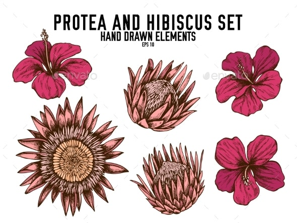 Vector Collection of Hand Drawn Colored Protea - Flowers & Plants Nature
