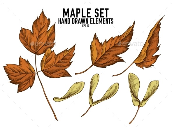 Vector Collection of Hand Drawn Colored  Maple - Flowers & Plants Nature