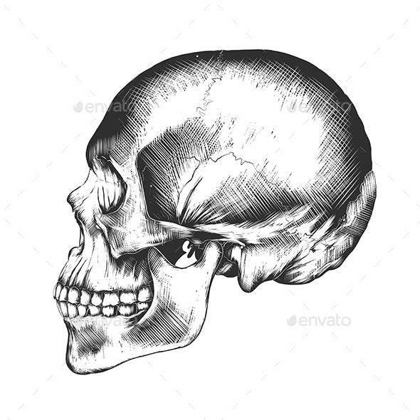 Human Skull - Miscellaneous Vectors