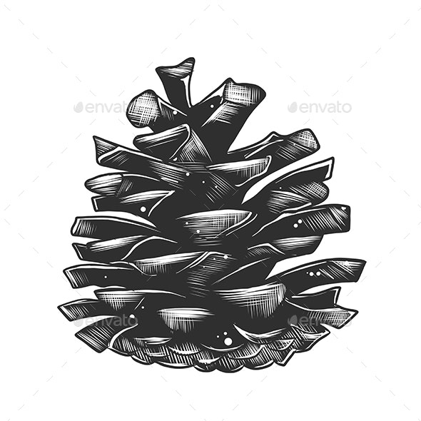 Hand Drawn Sketch of Pinecone in Monochrome Isolated - Organic Objects Objects