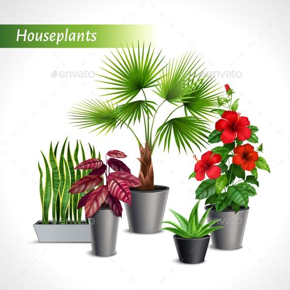 Houseplants Realistic Composition - Flowers & Plants Nature