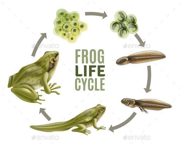 Frog Life Cycle Set - Nature Conceptual