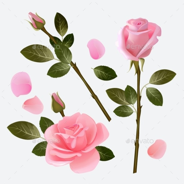 Rose Collection. - Objects Vectors