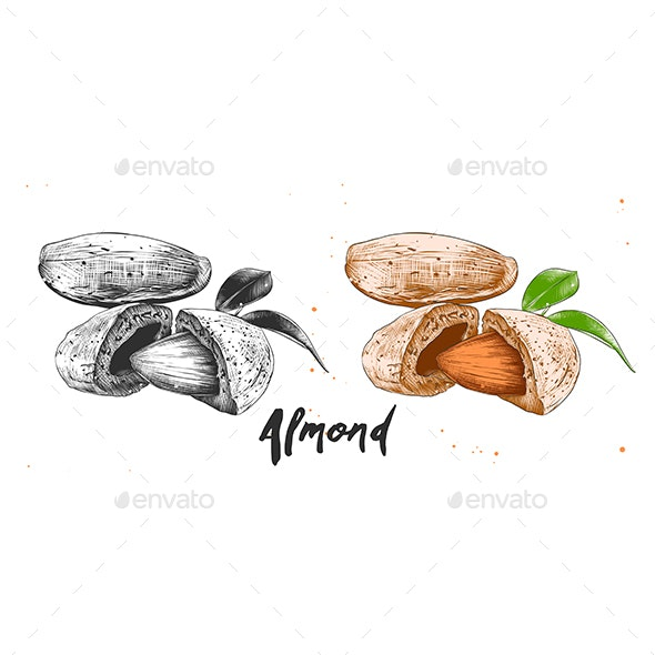 Hand Drawn Sketch of Almond Nuts - Food Objects