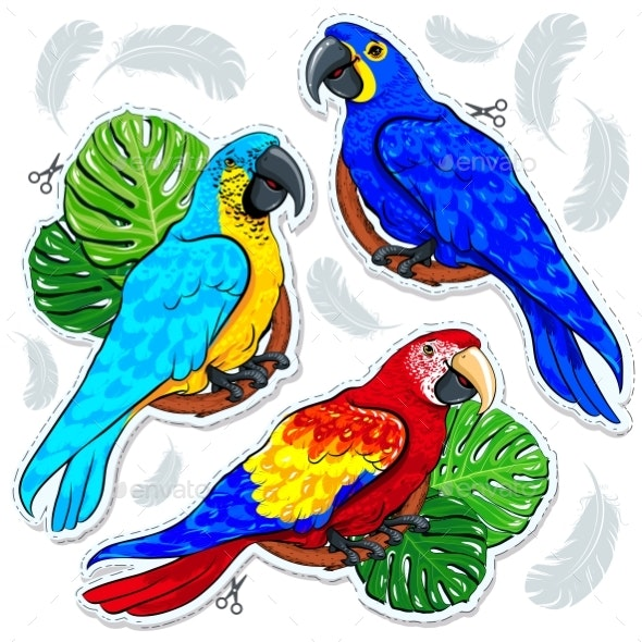 Bright Colored Parrots and Palm Leaves - Animals Characters