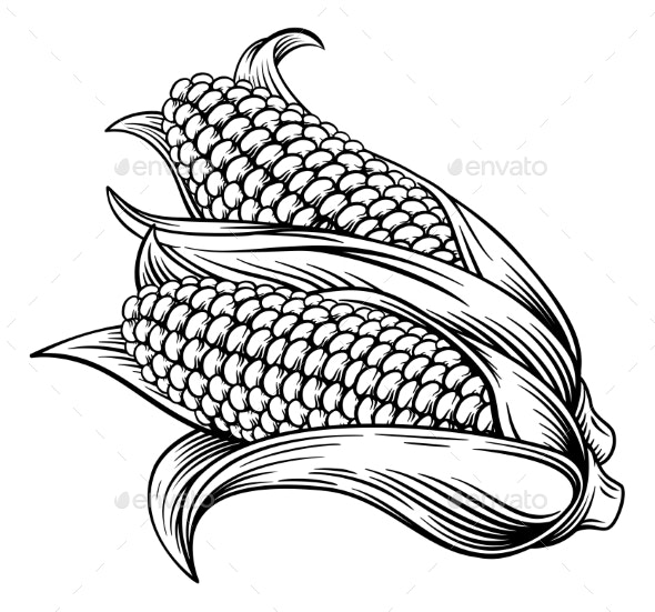 Sweet Corn Ear Woodcut Etching Illustration - Food Objects