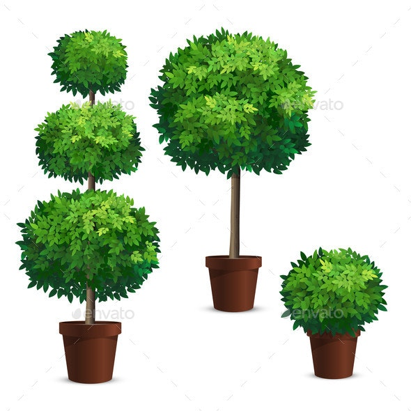 Set of Topiary Trees or Shrub in a Pot - Flowers & Plants Nature