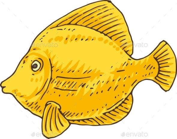 Yellow Tang Zebrasoma Fish - Animals Characters
