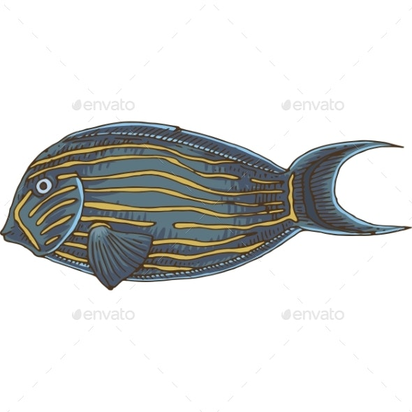Blue Banded Surgeonfish - Animals Characters