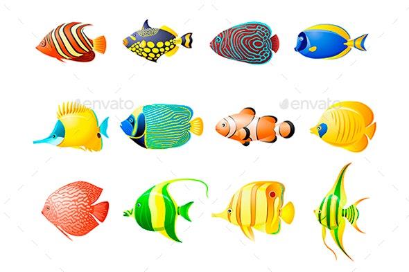 Aquarium Tropical Fish - Animals Characters
