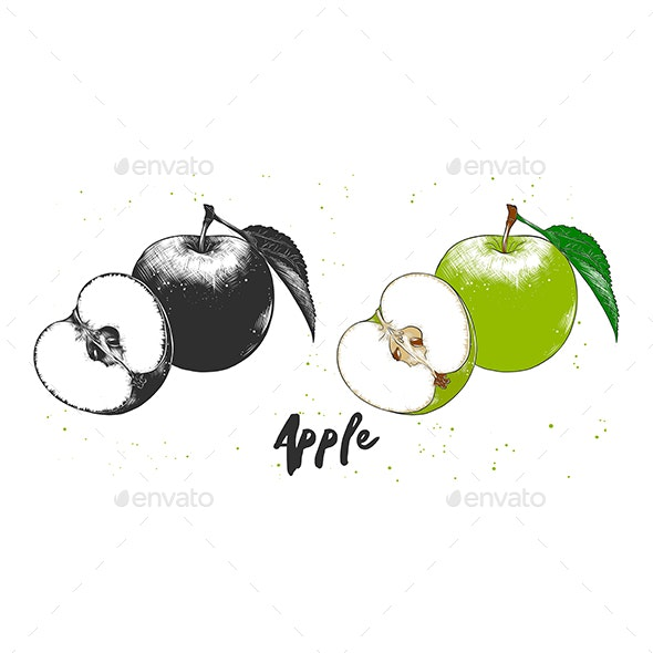 Hand Drawn Sketch of Apple - Food Objects