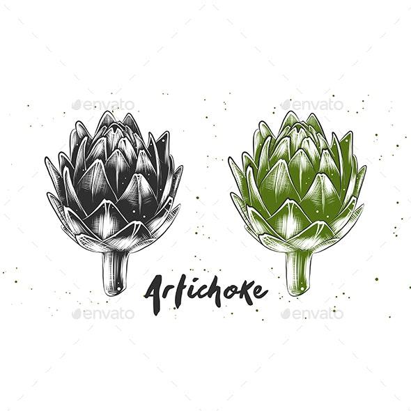 Hand Drawn Sketch of Artichoke - Food Objects