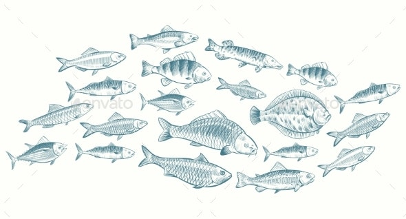 Hand Sketched Fish Vector Illustration - Miscellaneous Vectors