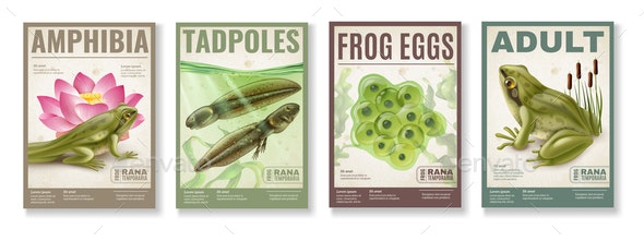 Frog Life Cycle Posters Set - Flowers & Plants Nature