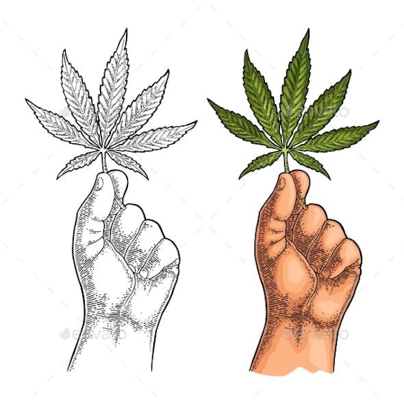 Male Hand Holding Marijuana Leaf Engraving