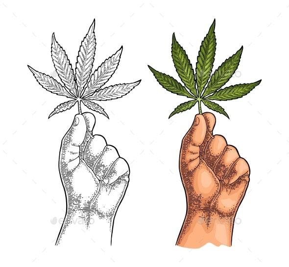 Male Hand Holding Marijuana Leaf Engraving - People Characters