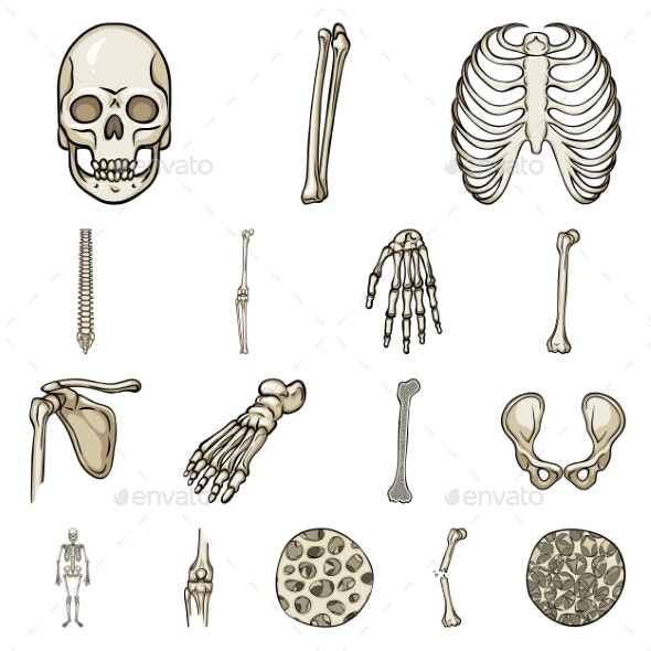 Vector Illustration of Bone and Skeleton - Miscellaneous Vectors
