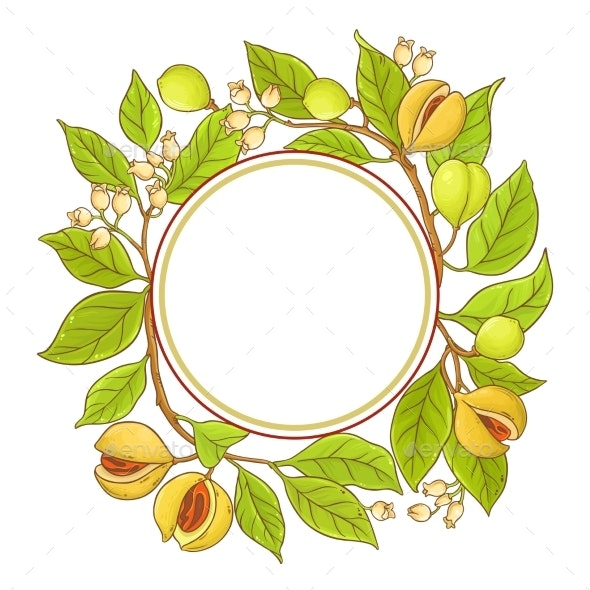 Nutmeg Branch Vector Frame - Food Objects