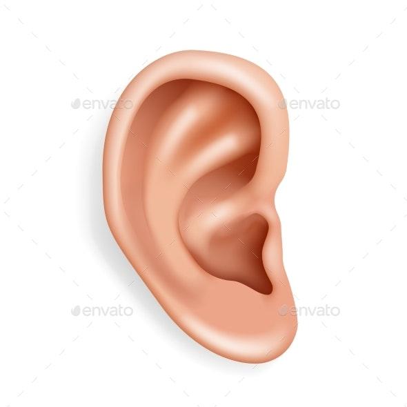 Human Ear Closeup - Organic Objects Objects