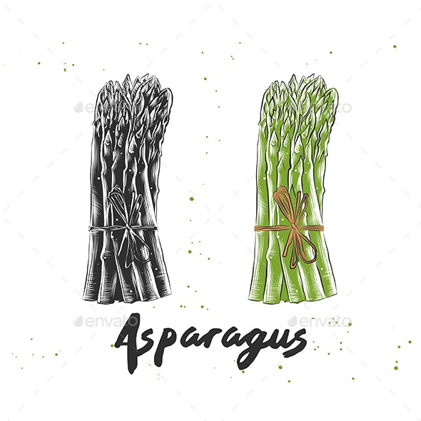 Hand Drawn Sketch of Asparagus - Food Objects