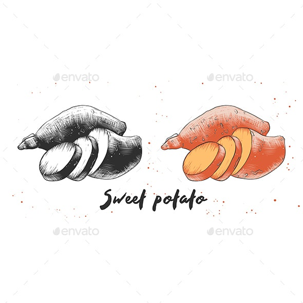 Hand Drawn Sketch of Sweet Potato - Food Objects