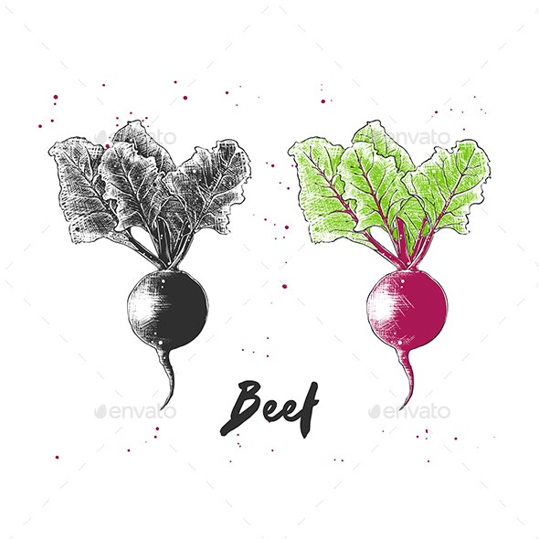 Hand Drawn Sketch of Beet - Food Objects
