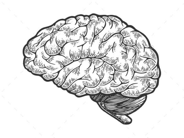 Human Brain Sketch Engraving Vector - Health/Medicine Conceptual