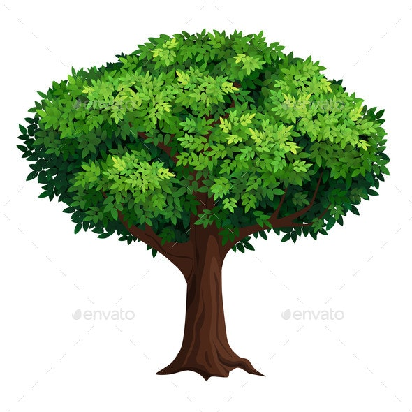 Large Tree with a Thick Crown - Flowers & Plants Nature