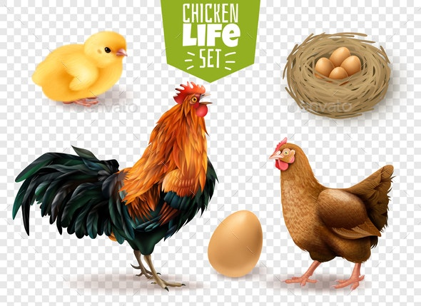 Chicken Life Transparent Set - Animals Characters