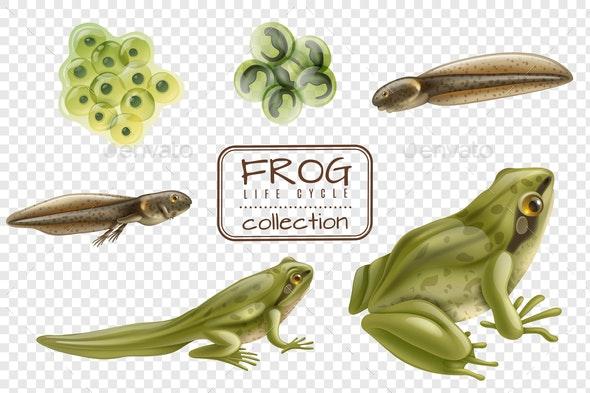 Frog Life Cycle Set - Animals Characters