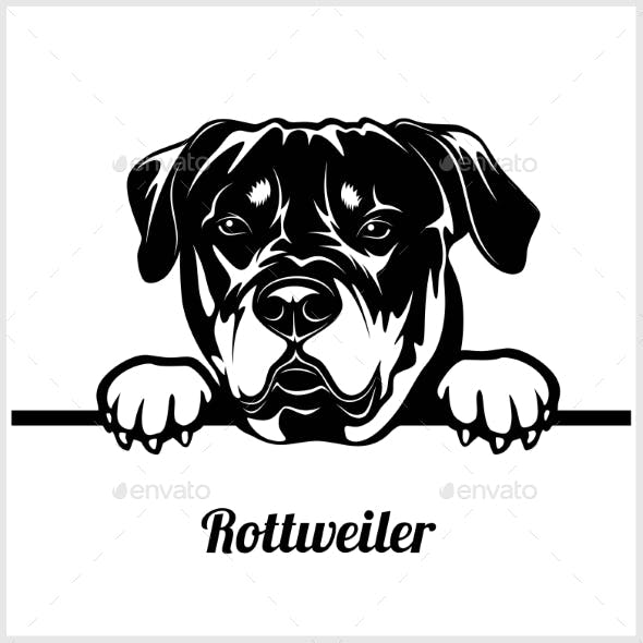 Rottweiler - Peeking Dogs Breed Face Head