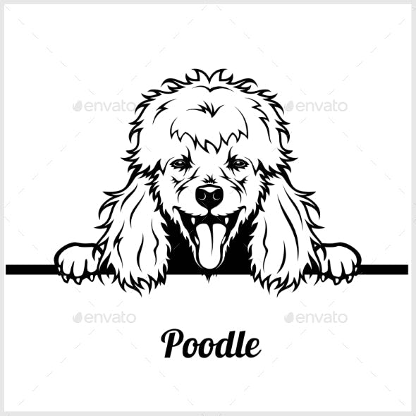 Poodle Peeking Dog Face