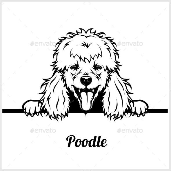 Poodle Peeking Dog Face - Animals Characters