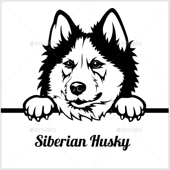 Siberian Husky Peeking Dog Face - Animals Characters