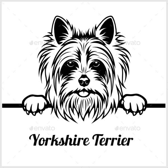 Yorkshire Terrier Peeking Dog Face