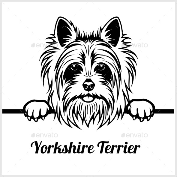 Yorkshire Terrier Peeking Dog Face - Animals Characters