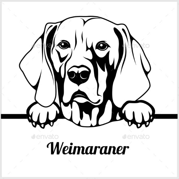 Weimaraner Peeking Dog Face