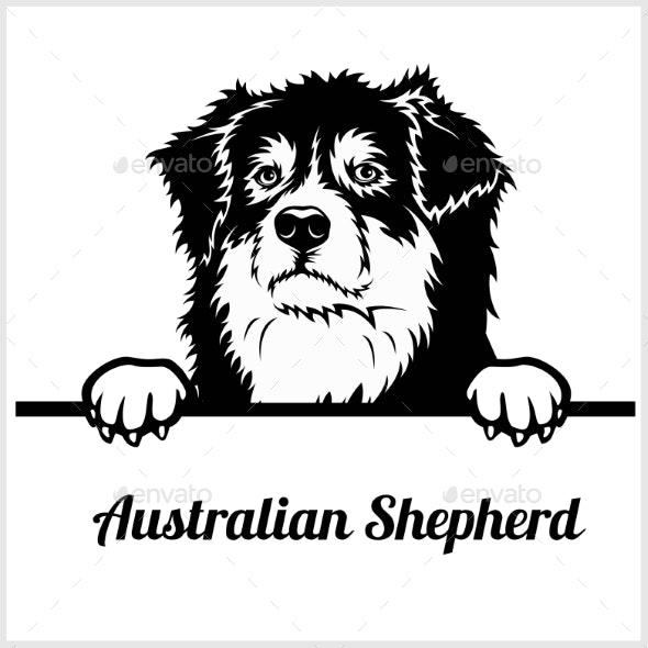 Australian Shepherd Peeking Dog Face - Animals Characters