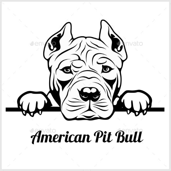 American Pit Bull Peeking Dog Face