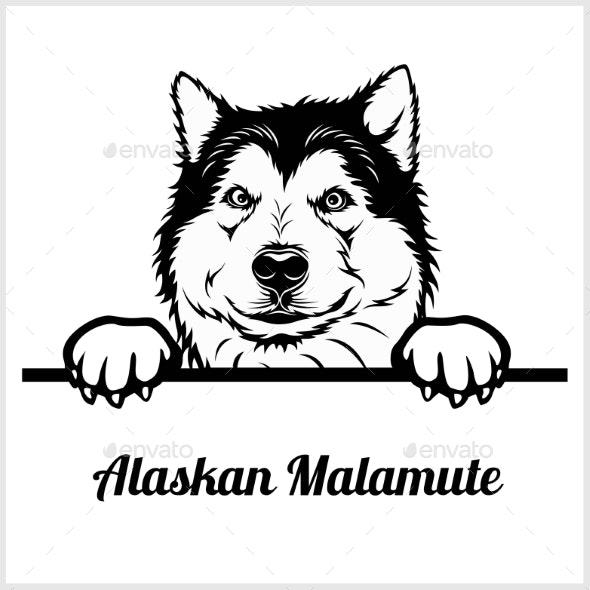 Alaskan Malamute Peeking Dog Face - Animals Characters