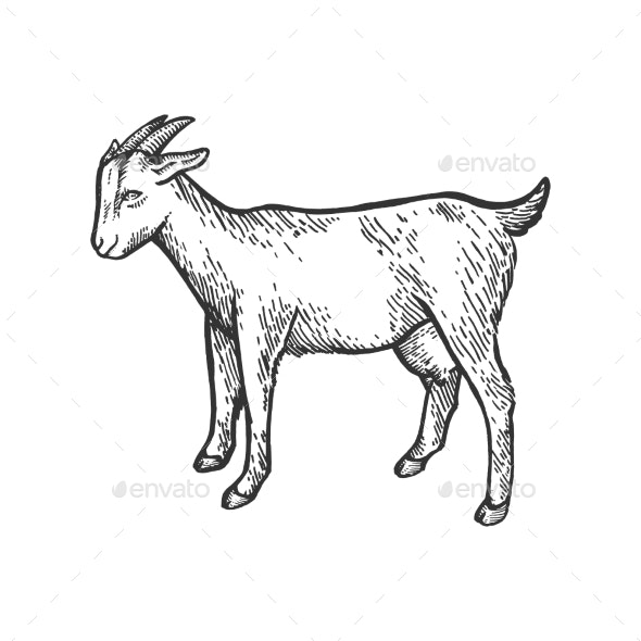 Goat Farm Animal Sketch Engraving Vector - Animals Characters